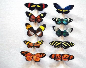 Butterfly Magnets, Set of 10, Insects, Refrigerator Magnets, Kitchen Magnets, Helicon Butterflies, Handmade
