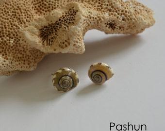 Seashell Jewelry … Shell Stud Earrings (1108)