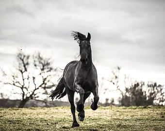 Friesian horse photography. Black horse print wall art. Running horse photo. Black stallion art print. Horse home decor. French countryside