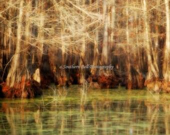 Lake Photography Bayou Print Water Photos Red Moss 8x10 Trees Fall Trees Swamp Lake Photo Water Red Tree Louisiana Bayous and Swamps  10