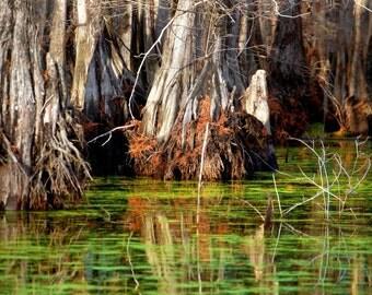 ReflectionsTree Bayou Photo Water Shot Photograph Print Water Photography 8x10 Fall Trees Swamp Lake Pictures Red Tree Louisiana Bayous 19