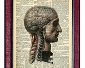 ANATOMY - HEAD Dictionary Page Mixed Media Anatomy Drawing Wall Art Medical Illustration Mixed Media Print Human Anatomy Print