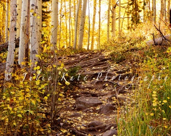 "20"" x 30"" Print on Canvas, Colorado Aspen Trees, Fine Art Print - ""Path To Fall"""