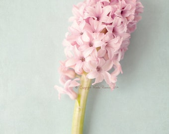 hyacinth spring flower colour photo print - whimisical fine art nature photography, pink, pastel colour photo, floral, soft, pretty