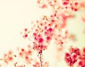 SALE, Nature photography, cherry blossom art, large art, office decor, cherry blossom wall art, coral prints, spring decor, girl nursery art