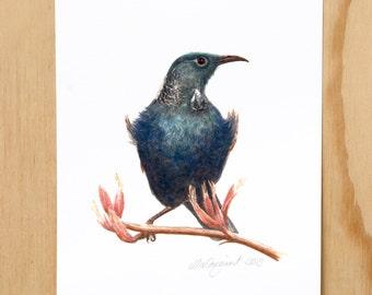 Tui - a native New Zealand bird print