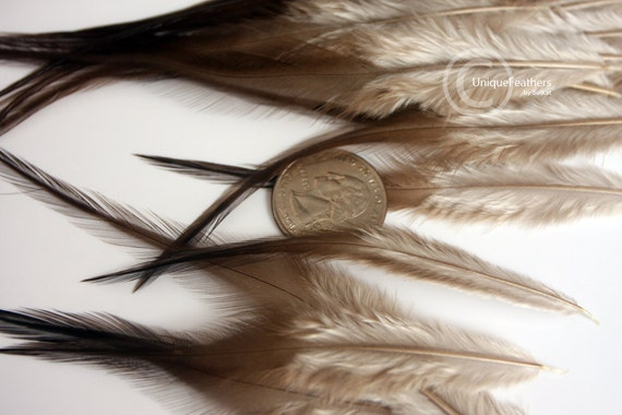 Brown feathers natural feathers craft feather supplies hair for Natural feathers for crafts
