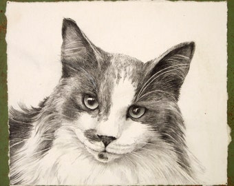 "original pencil drawing mounted for easel or to hang shelter cat charity - ""Bikki"""