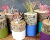 Stocking Stuffer - Airplant Holder - Custom Colors - Includes Plant