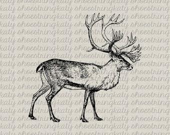Deer Reindeer Antlers Winter Illustration Digital Download Printable Image,Transfer, Clip Art, Pillows, Paper Crafts INSTANT DOWNLOAD