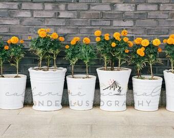 Potted Sunshine - Photographic Print - travel, Art, Wall, Hanging, Decor, Photography, marigold, wanderlust, happy, bohemian, orange, boho