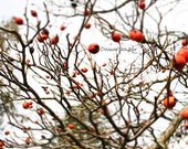 Tree with Red Fruits Trav...
