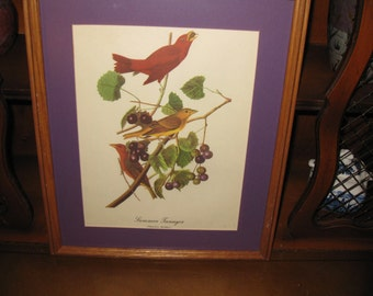 "VINTAGE BIRD PRINT-Summer Tanger 12 3/4"" X 15 1/4"" Oak Frame"