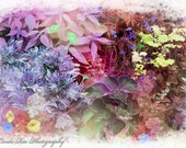 Flower Garden Pastel Pink Blue Purple Green Yellow Fine Art Photography Home Office Bedroom Decor