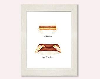 Italian pastries print, 5x7 matt paper, puff pastry with custard, cannoli with ricotta cream, food art, kitchen art, dessert illustration