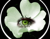 Glass Cabochon - White Flower with Eye Detail