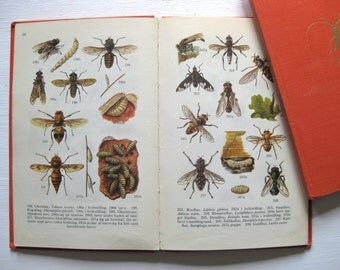 Danish vintage 1950s illustrated book, entymology bookplates, insects