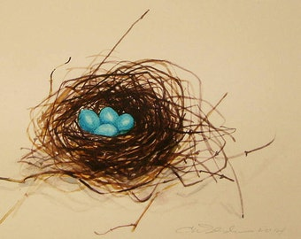 Nest of Robins Eggs