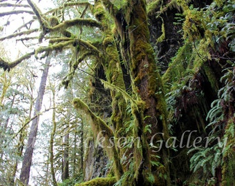 Forest Photography, Rainforest Fine Art Nature Photography