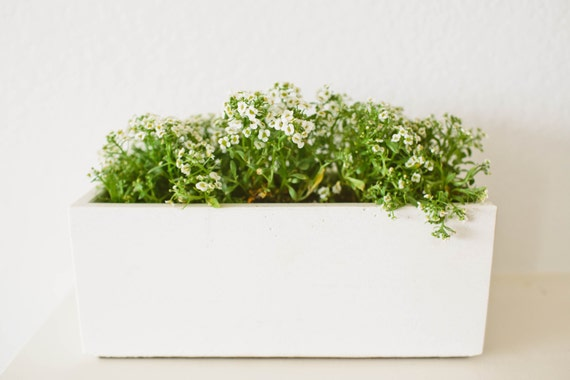Sale Windowsill Herb White Concrete Planter By Nystromgoods