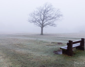 A lonely winter scene in Lyndhurst, New Forest - Landscape photography - mounted print photograph 12 x 9