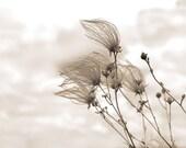 Fall Photography, Autumn Art Print, Wind sculpted, Minimalism, Rustic, Home Decor, Brown, Tan,  Khaki, Country - Windblown