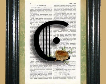 Letter C with Bird Nest Dictionary Page Art Book Page Art Upcycled Book Page Art