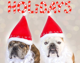 Happy Holidays English Bulldog Greeting Card, Fine Art Photography Print, Purrfect Pawtrait Pet Photography, Animal Photography