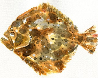 Watercolour Print of a Turbot Fish