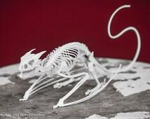Horned Wyvern Dragon Skeleton 3D Print Taxidermy