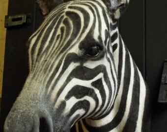 Faux Taxidermy Zebra Head Animal Friendly Decorative Art Handmade in Wales, Great Britain Life Size