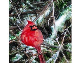 Cardinal - Original