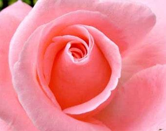 Rose Fragrance Oil 10ml