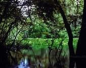 Atchafalaya Swamp Basin -...