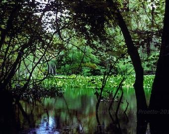 Atchafalaya Swamp Basin, Louisiana, Dark Swamp, Black Water, Swamp Lake, Green Swamp, Fine Art, Photography, Abstract, Nature, Landscape