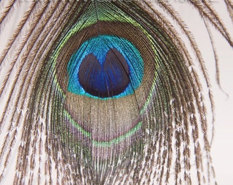 """Peacock Decor / Peacock Feather Print * 8.5x13"""" High Resolution Macro Photography / Peacock Decorations / Printable Art // Instant Download"""