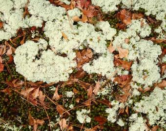 Moss & Lichen [Lithonia, GA]