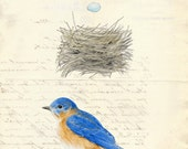6 Bluebird Nest Egg Card Vintage French Paper Background