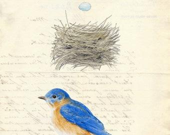 6 Bluebird Nest Egg Card Vintage French Paper Background