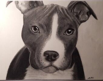 Pitt Bull Charcoal Drawing 11x15
