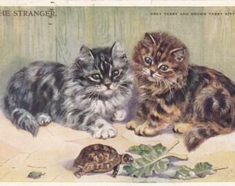 """1954 Signed Mabel Gear Grey & Brown Tabby Kittens , Tortoise Eating Leaves """"The Stranger"""""""