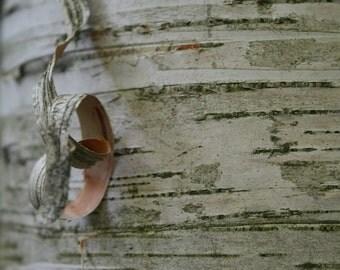 Birch Wood Curlycue