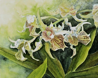 Yellow Dendrobium Orchid Painting Print
