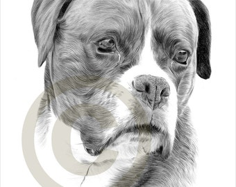 Chien chiot cocker spaniel dessin au crayon par garytymonartwork - Boxer chien dessin ...