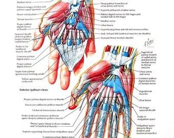 Anatomy Print - Wrist Hand, Palmar Dissections, Flexor Tendons, Arteries, Nerves at Wrist - Human Anatomy - 1989 Vintage Book Page - 12 x 9