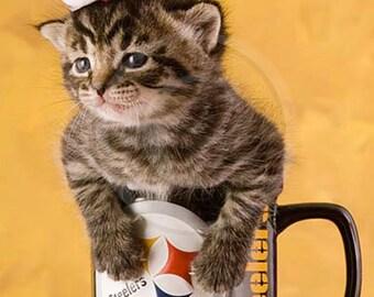 Steelers Cute Kitten photo, Santa Hat, Pittsburgh Steelers