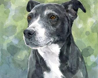 Custom Pitbull Painting - Original Dog Portrait Watercolor