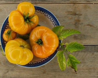 Tangerine Tomato Seeds - Orange Beefsteak Tomatoes