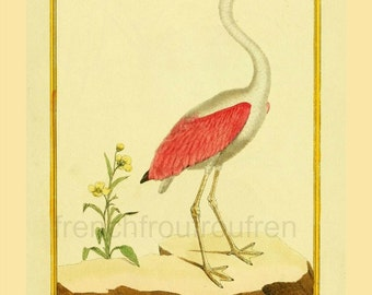 antique french illustration pink flamingo DIGITAL DOWNLOAD