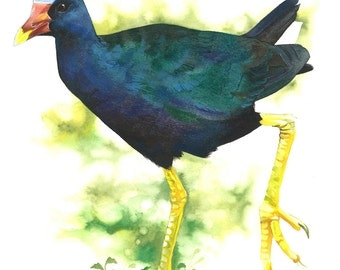 Limited Edition GICLEE Print / Watercolor Painting of a Purple Gallinule